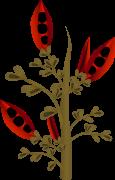 firebog firebean 1