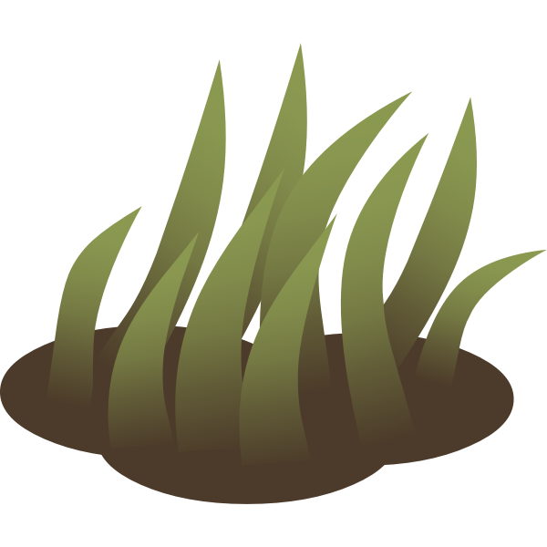 Growing grass in nature