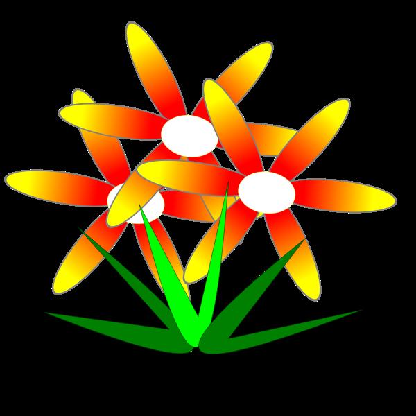 flor de mato