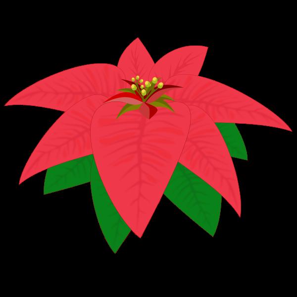 Flower Natal 2015