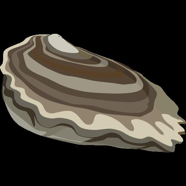 food oysters ocean