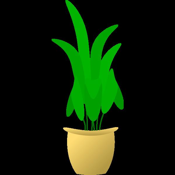 Illustration of large leafed plant in pot