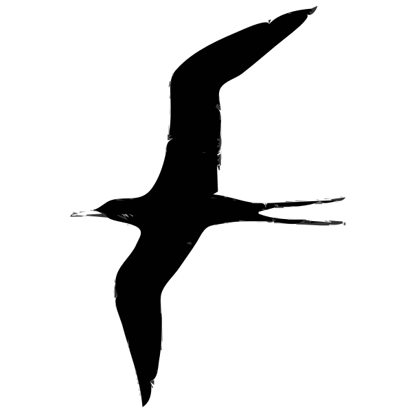 Frigate bird vector illustration