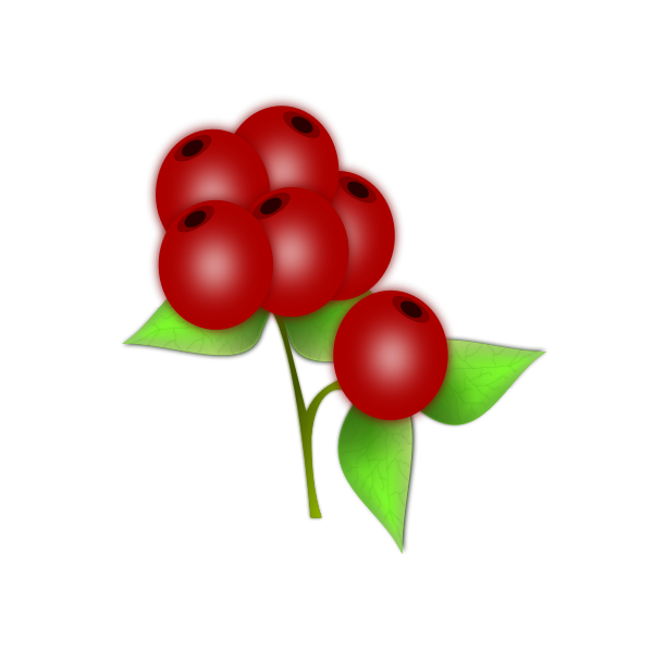 Vector drawing of leaves and berries of a holly