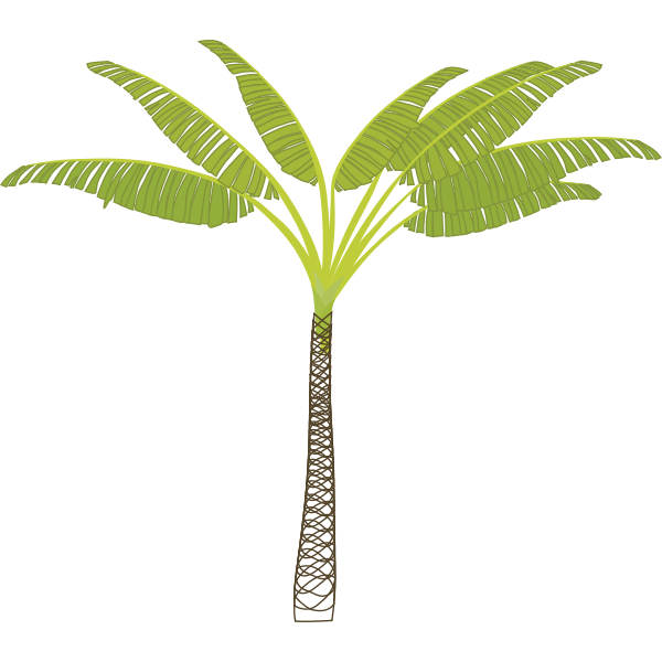 Vector image of tropical palm tree