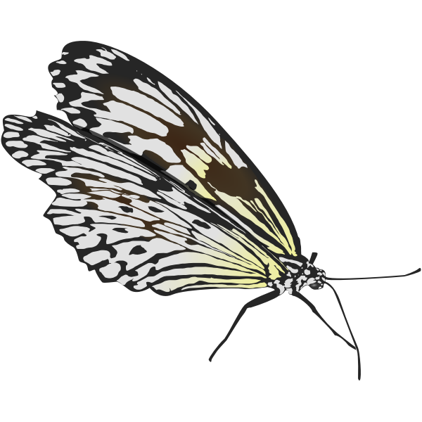 Walking butterfly vector drawing