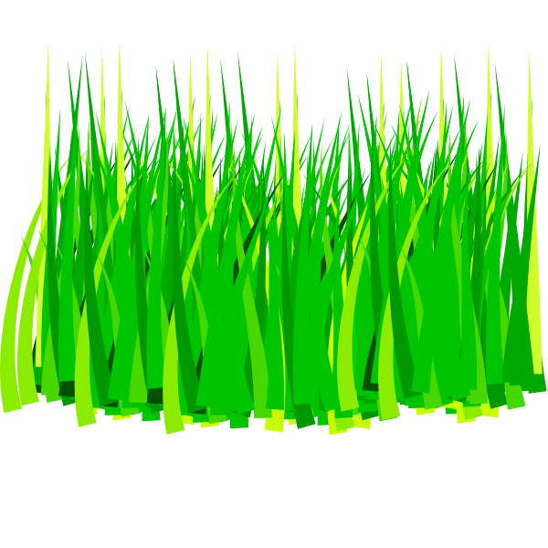 Leaves of spring grass