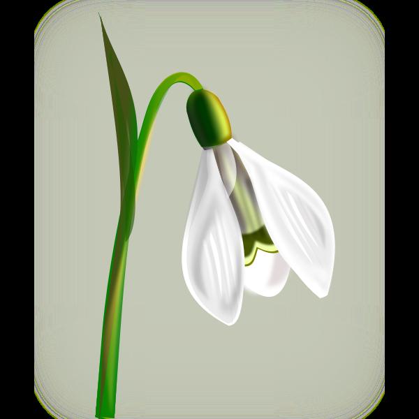 Snowdrop with three petals vector clip art