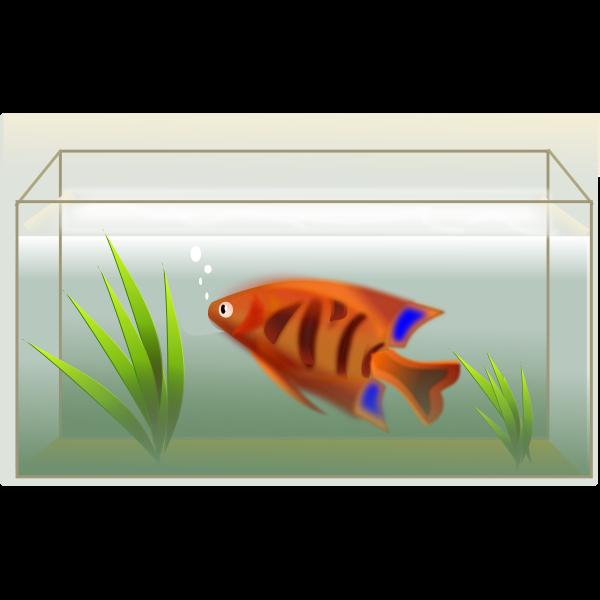Orange fish in aquarium vector illustration