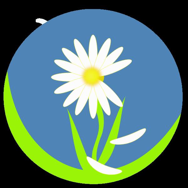 Daiy love petals vector image