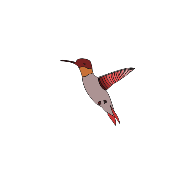 Vector image of flying humming bird