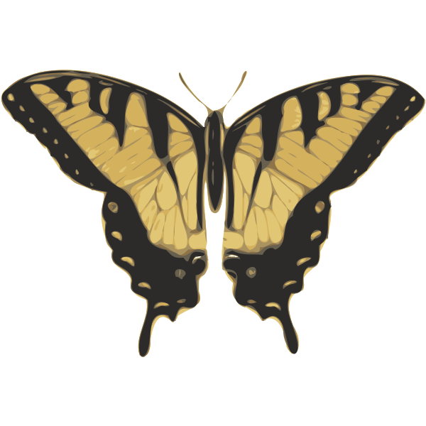 butterfly (papilio turnus) top view