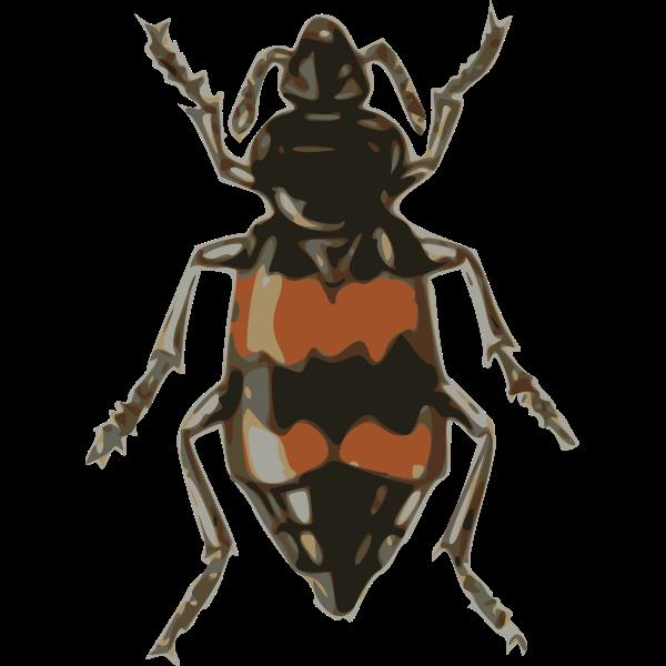 spotted sexton beetle (necrophorus guttatus)