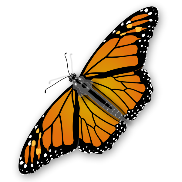 Spotty butterfly vector graphics