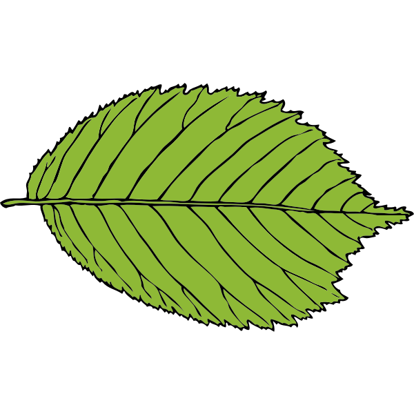 bi-serrate leaf