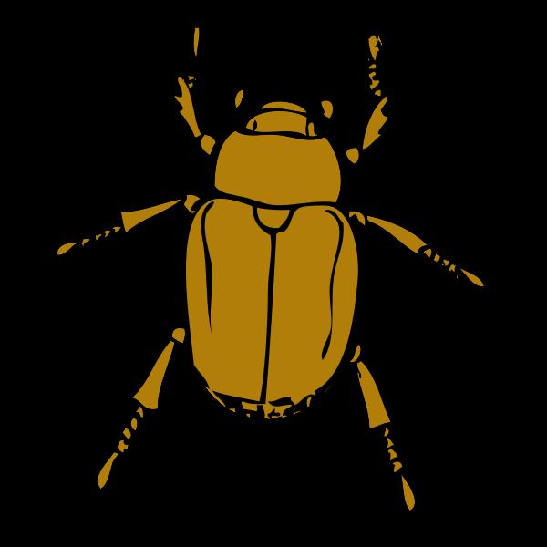 chafer bug