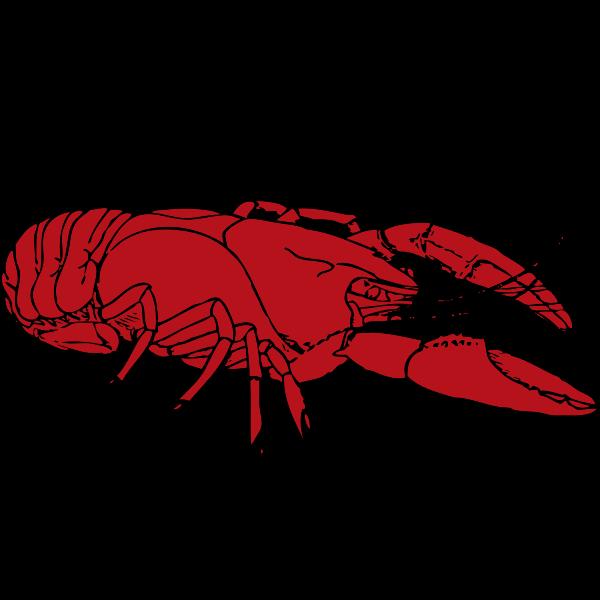 Red crayfish vector clip art