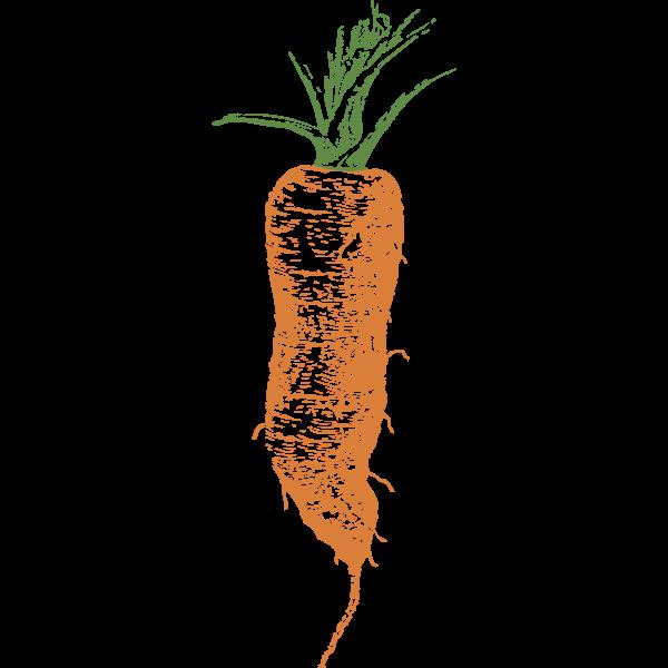 half long carrot