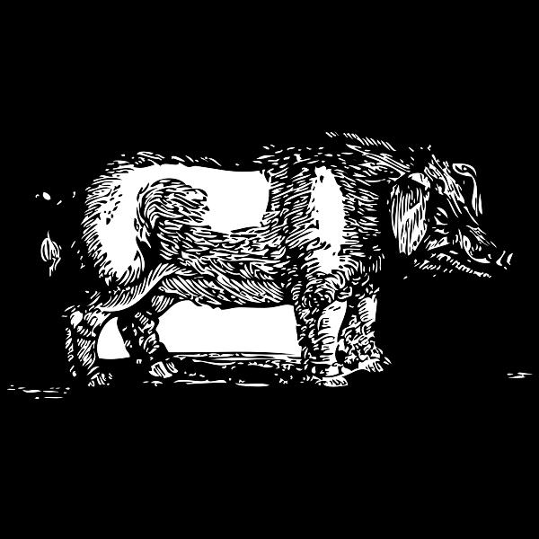 Hog drawing