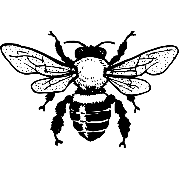 Vector image of honey bee