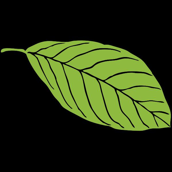 oval leaf