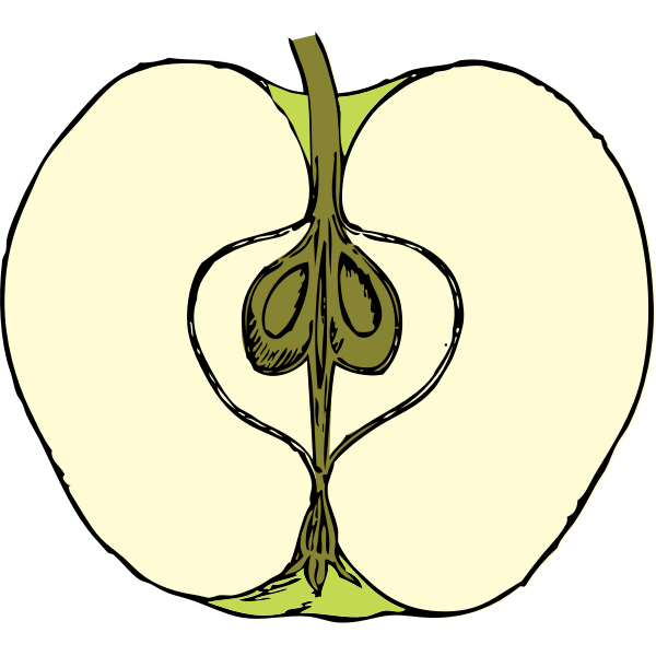 Vector image of apple cut in half