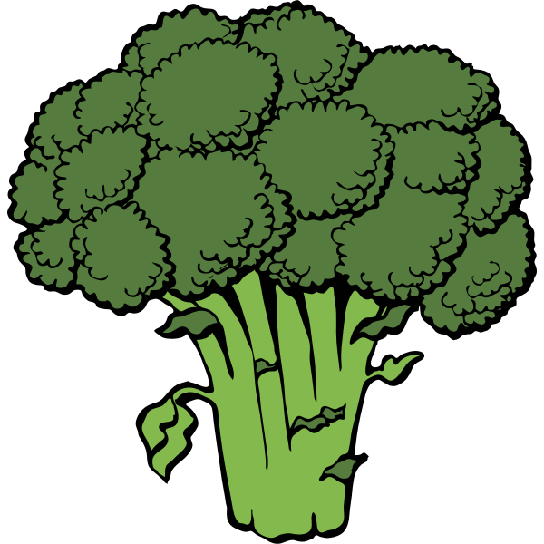 Vector image of broccoli