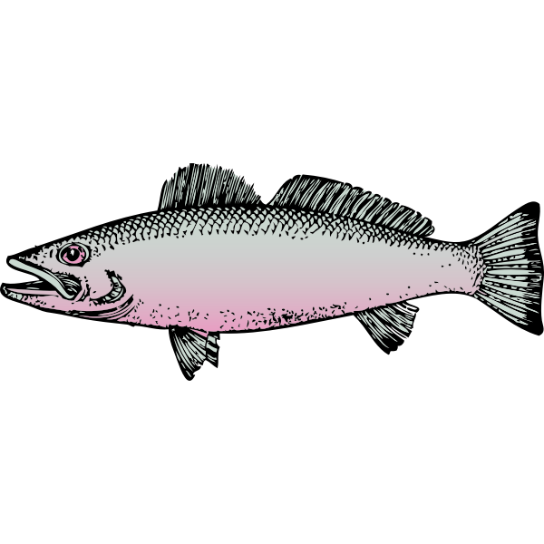 Generic river fish vector drawing