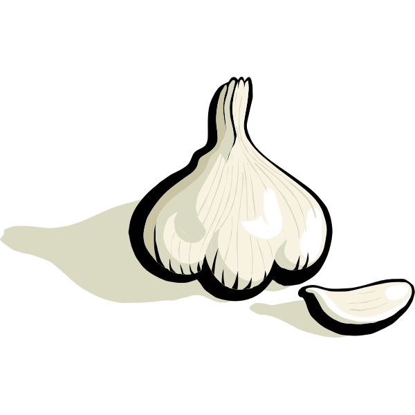 Garlic vector clip art
