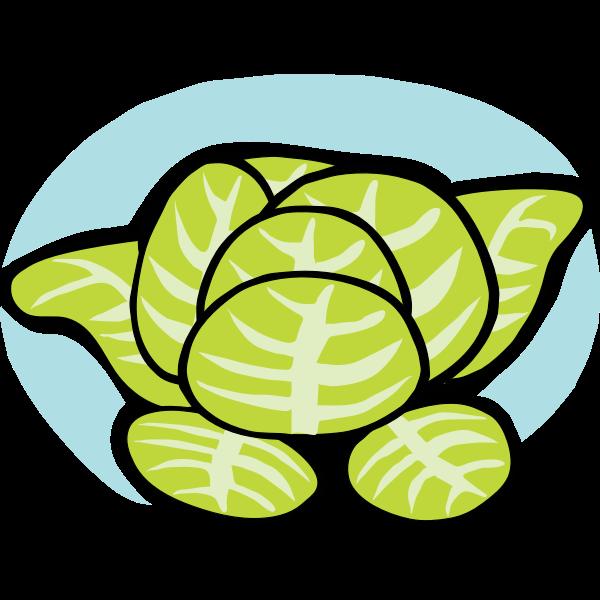 Iceberg lettuce vector clip art