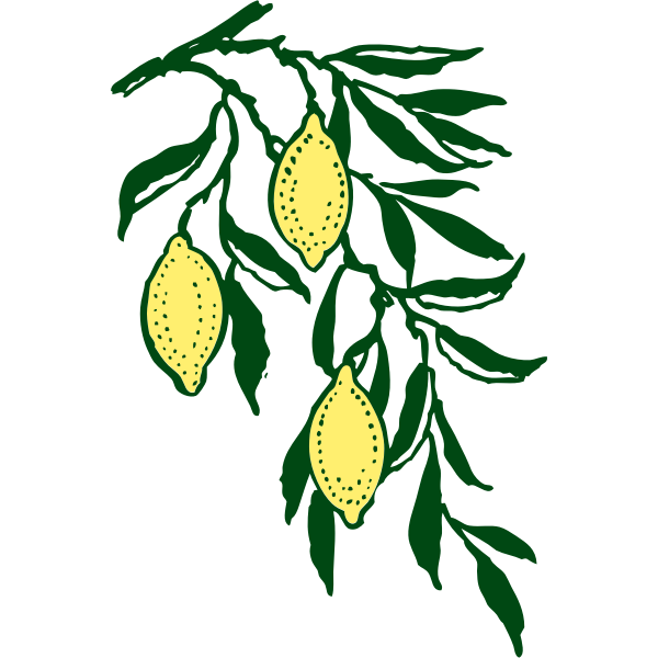 Vector clip art lemon branch