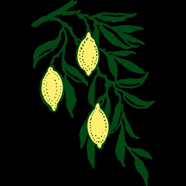 Vector clip art lemon branch