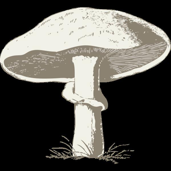 Vector image of a mushroom