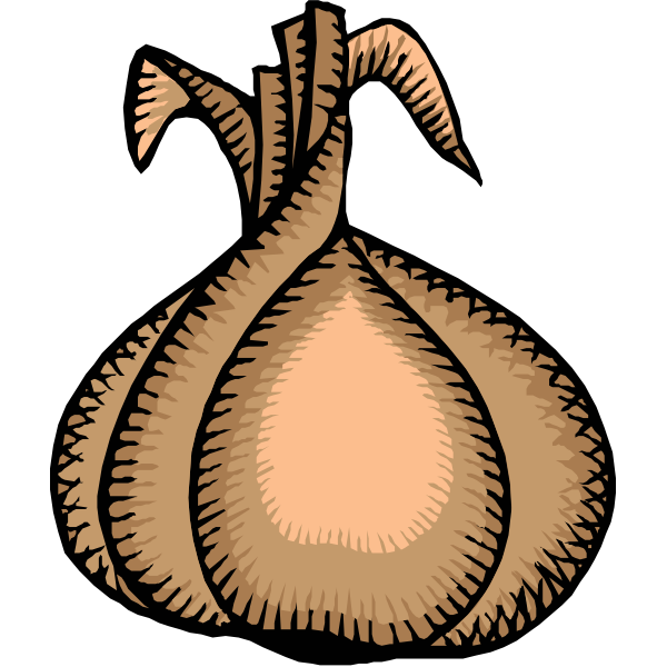 Ripe onion vector clip art