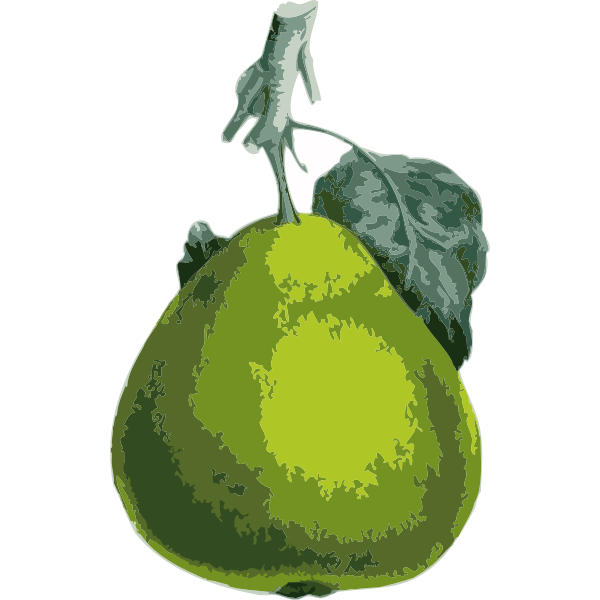Vector clip art of pear