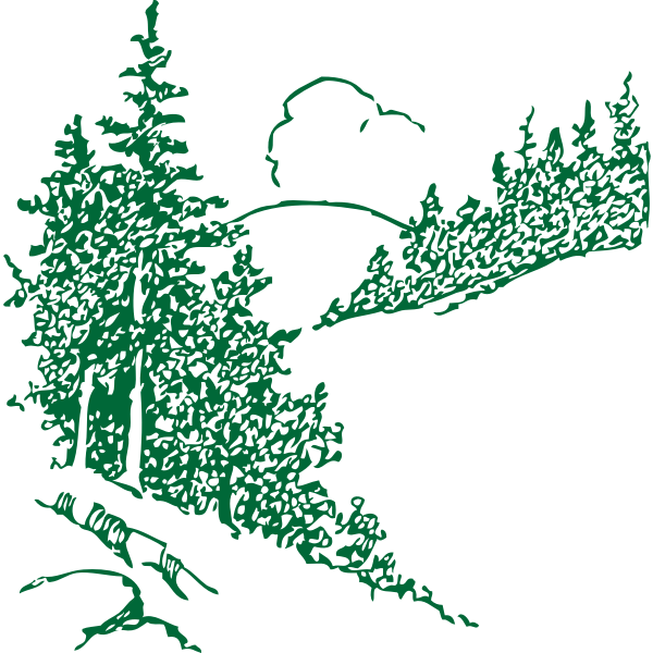 Pines in the mountain vector image
