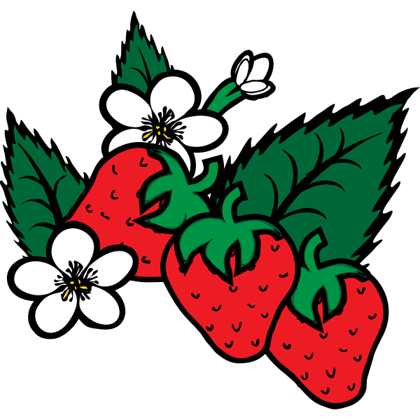 Vector image of freshly picked strawberries