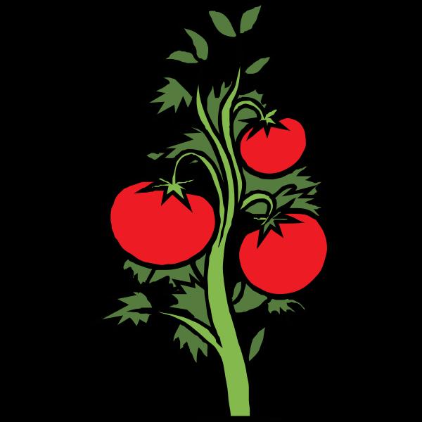 Tomato plant vector clip art