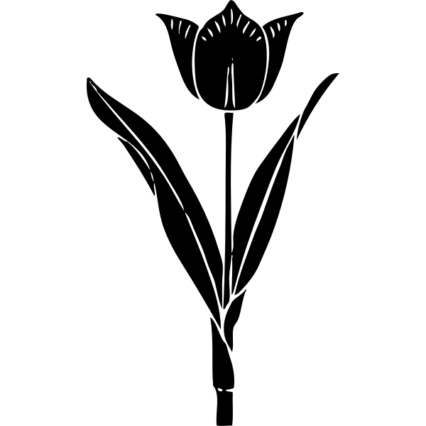 Tulip silhouette vector image