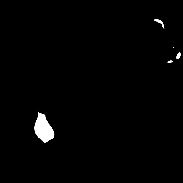 Young bear vector image