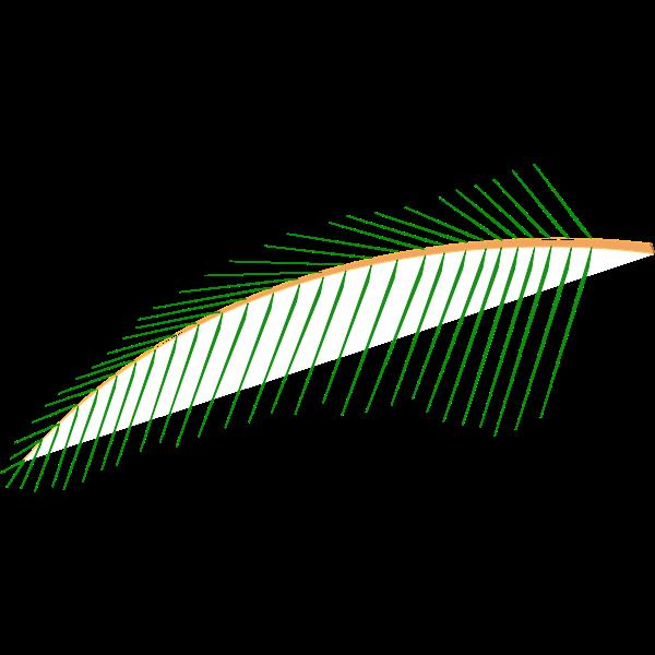 Leaf of Coconut Tree