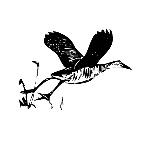 King rail bird in flight outline vector illustration