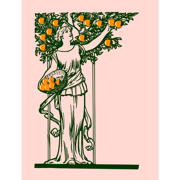 Lady picking oranges