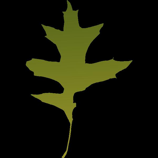 leaf oak green