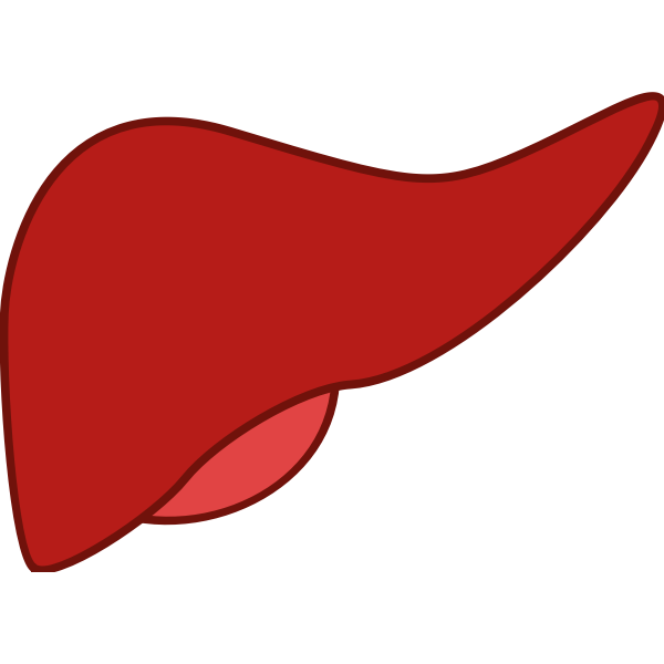 Liver in red