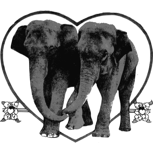 Lover Elephants