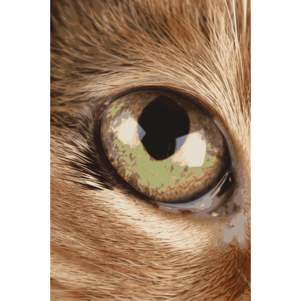 Photorealistic eye vector image