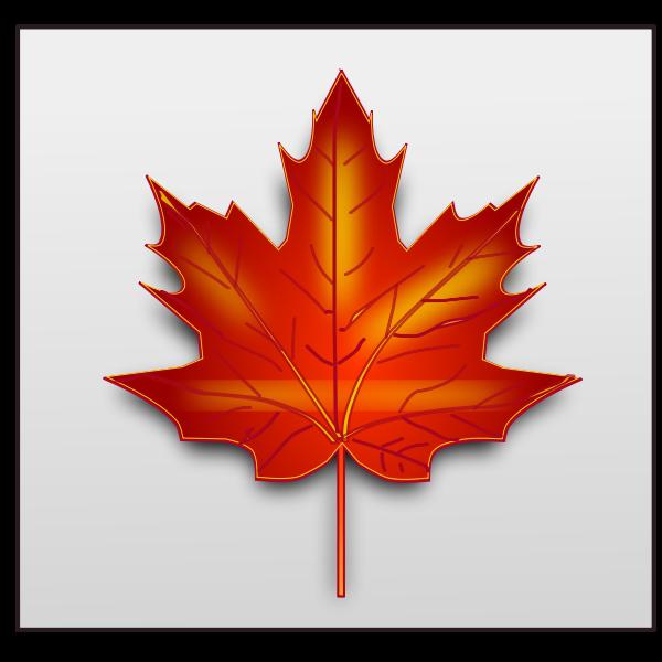 Brown maple leaf vector image