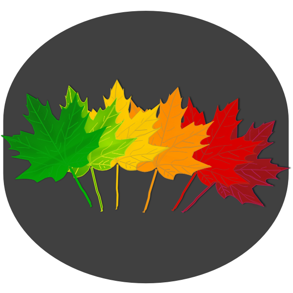 Vector drawing maple leaves on gray background