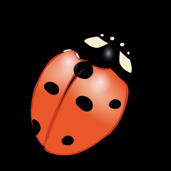 Ladybug vector graphics